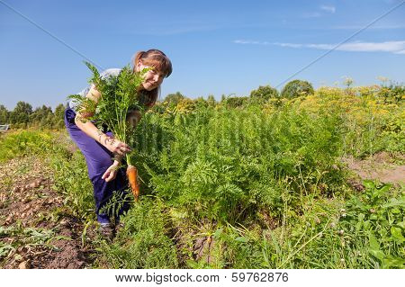Young Woman Gardener Holding A Sheaf Of Carrots In Her Garden