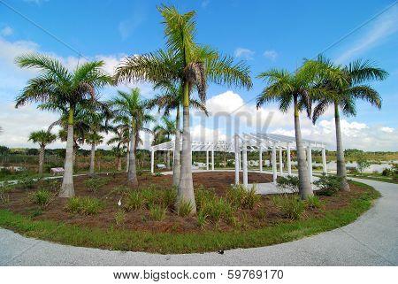 Trellis in the Palms