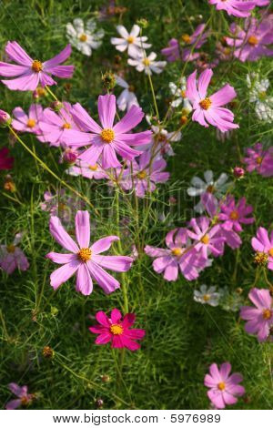 Colorful Bright Flowers
