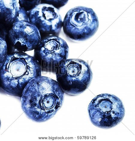 Blueberry Antioxidant Superfood Isolated On White Background  Macro. Fresh  Blueberries Isolated On