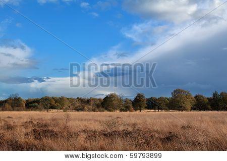 Autumn Meadow Over Blue Sky