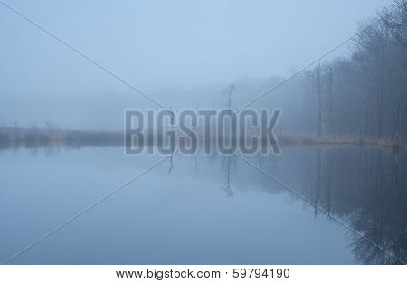 Wild Lake In Forest And Dense Fog