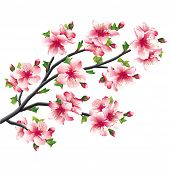 Постер, плакат: Cherry Blossoms Branch Japanese Tree Sakura