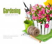 stock photo of bunch roses  - Pink roses and tulips with garden tools - JPG