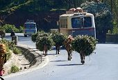 Addis Ababa, Ethiopia - November 25, 2008: Road Surrounded By Trees. Two Buses Traveling On The Road