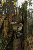 grebe on a tree