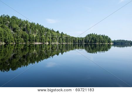 Tree Reflected on a Calm Lake