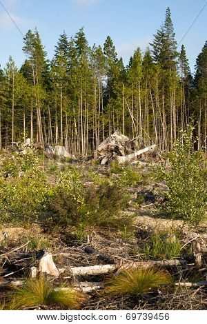 Landscape Left Scarred After Logging Clear Cut