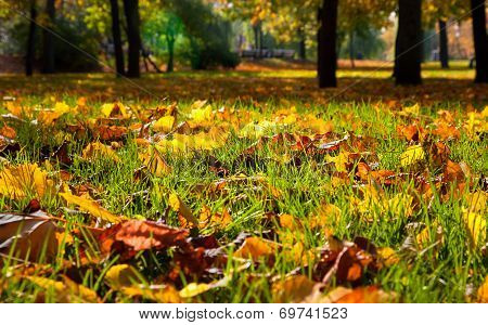 Autumnal Leaves In The Park