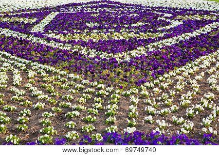 Heartsease, Flower Garden.  Flowers Background Pansy
