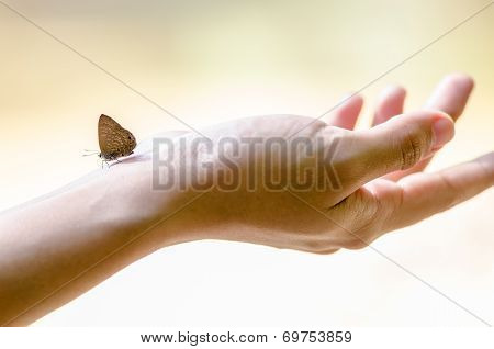Butterfly On Hand
