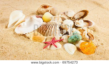 Pearl On The Seashell . The Exotic Sea Shell . Treasure From The Sea.