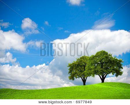 Encina en campo verde