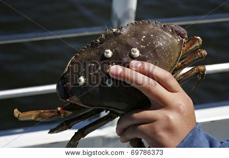 Child holding crab