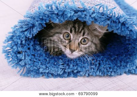 Beautiful kitten in rolled carpet, on light background