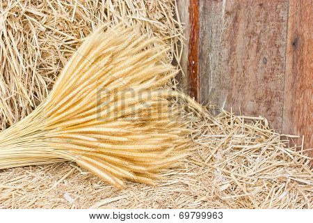 Sheaf Of Wheat On Hay.
