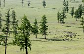 picture of wild horses  - Wild horses dot the wide - JPG
