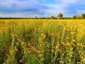image of illinois  - Prairie flowers bloom in vibrant sunlight in northern Illinois.