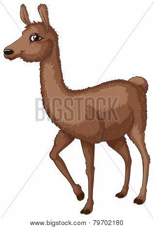 Illustration of a close up lama