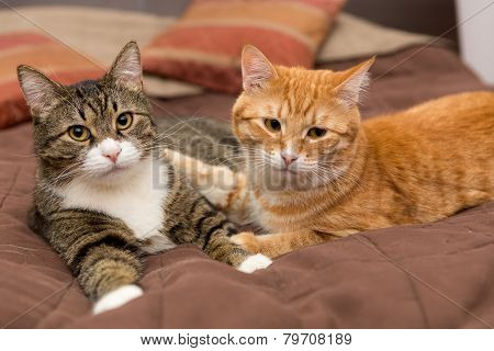Friendship Of The Two Striped Cats