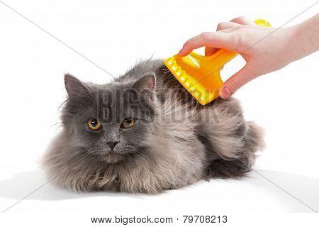 Fluffy Cat Comb