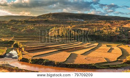 Malagasy Rice Fields