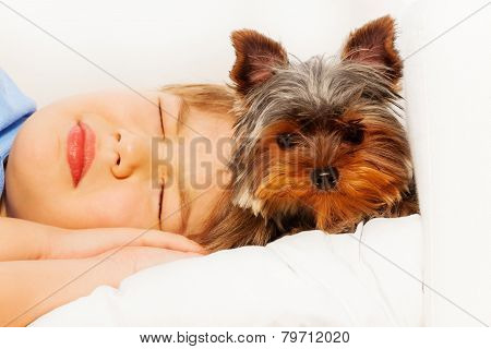 Close-up view of York Terrier with sleeping boy