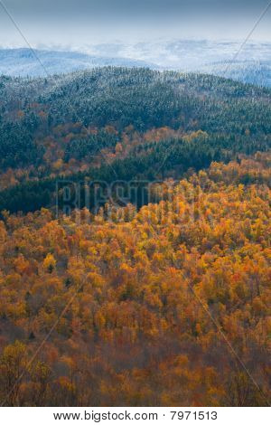 White Mountain Autumn
