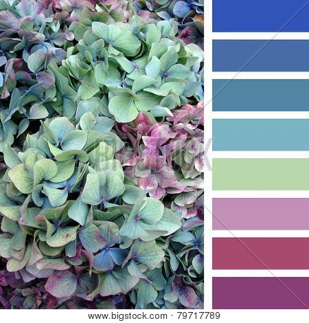 A background of hydrangea flowers, in a colour palette with complimentary colour swatches