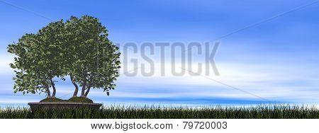 European beech tree bonsai - 3D render