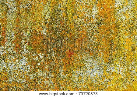Yellow Lichen On Concrete Wall