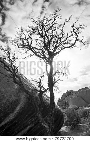 Ragged Tree