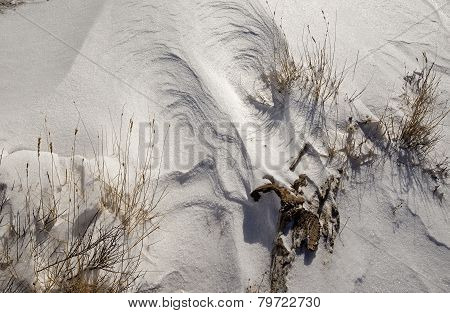 Windswept Snow and Grass