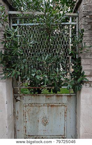 Plant Growing Through Rusty Door