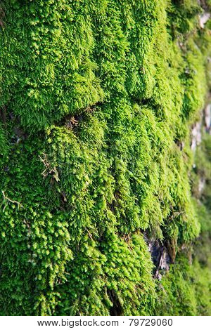 Moss Growing On Tree In Forest