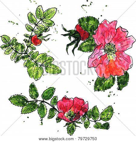 viatercolor vector floral set