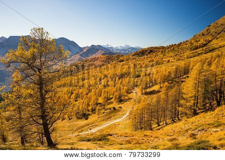 The colors of autumn in the Alps
