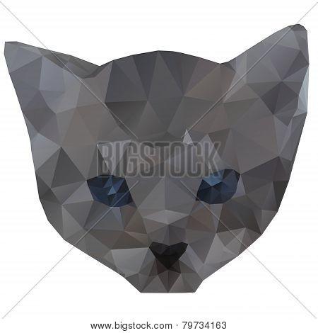 Kitten Head