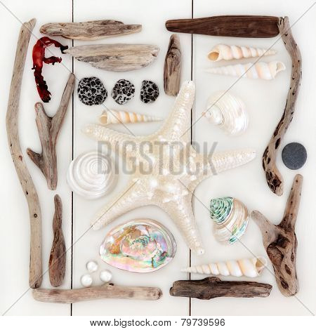 Starfish and sea shell selection, driftwood, pearls and seaweed over wooden white background.