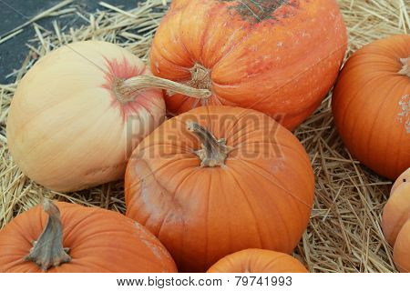 orange and white pumpkins in pumpkin patch
