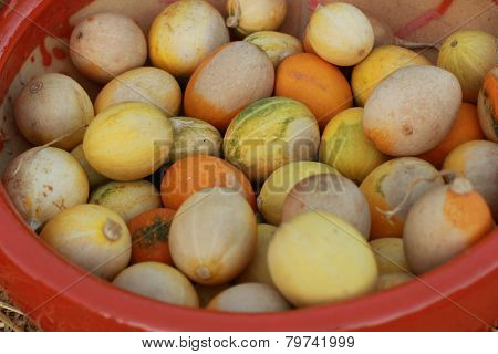 some light colored gourdsin clay pot