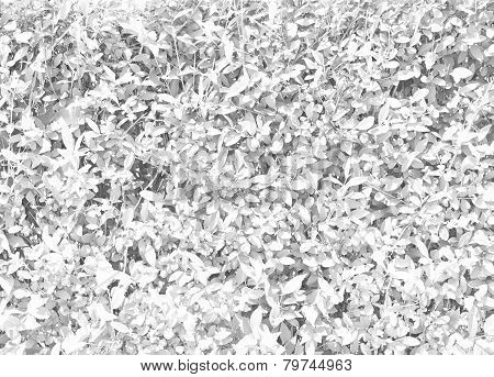 Colorless Light Texture Leaves
