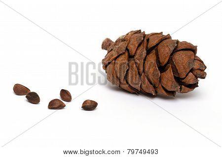 The cedar cone