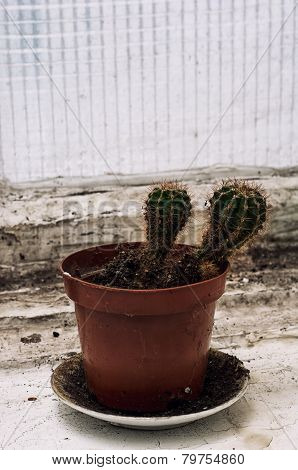 Scrubby Growths Of Cactus