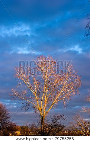 Tree lit by sunset against clouds