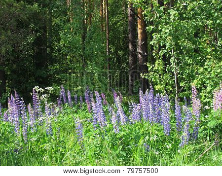 forest flowers - 2