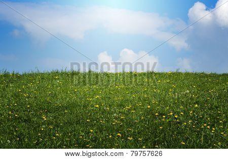 Spring Sunlit Meadow