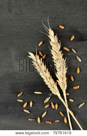 Spikelets and grains of wheat on dark wooden background