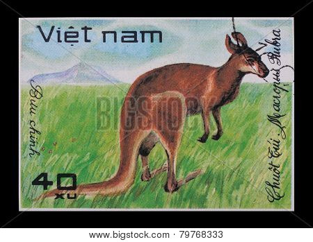 Post Stamp. Macropus Rubra