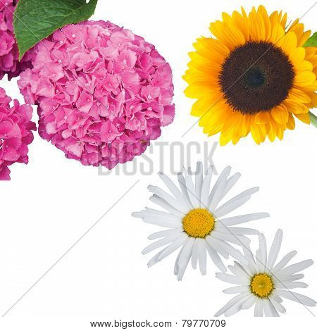 Hydrangea, Daisies and a Sunflower Isolated